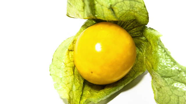 Physalis 4K Video